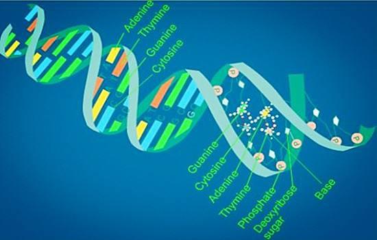 IB生物考什么?IB生物知识点总结