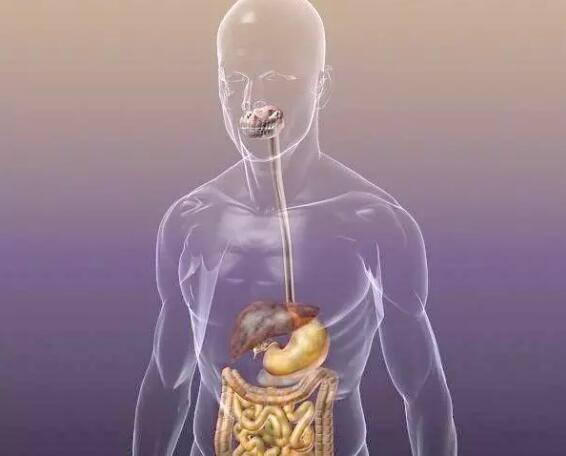 GCSE生物考点:GCSE生物消化系统介绍