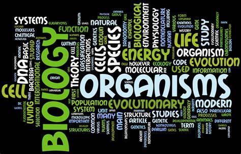 IB生物好拿分吗?IB生物课程及考试内容评估